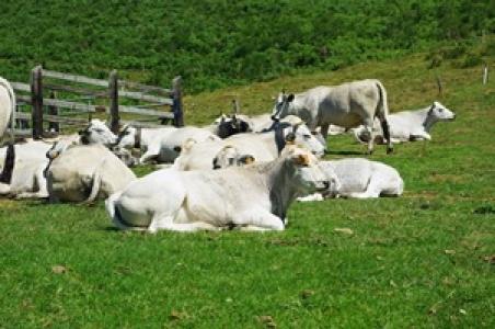 Photographie élevage