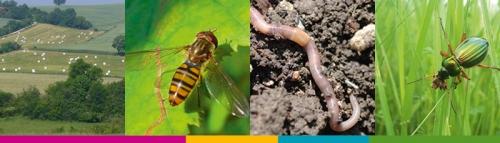 Agriculture et Biodiversité à travers le projet SEBIOREF