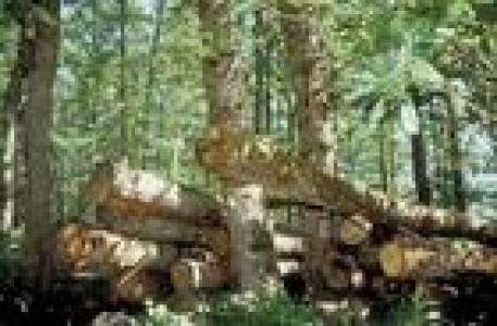 bois-forêt