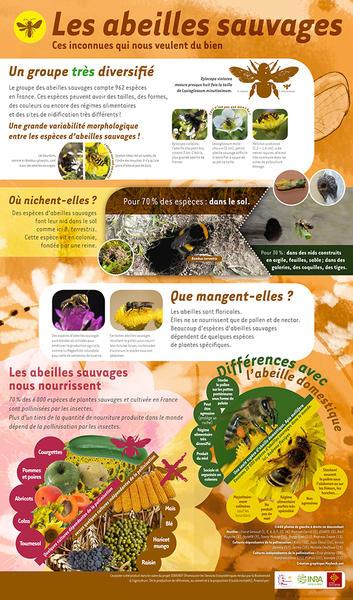 Poster Roll up Abeilles Sauvages - expo biodiversité