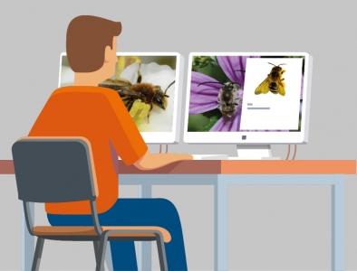 Modélisation de la pollinisation