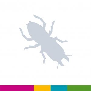 Fiche 4 : Coléoptères